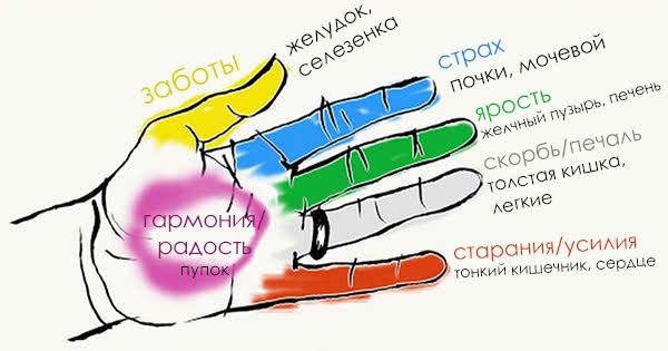 Пальцы рук и внутренние органы
